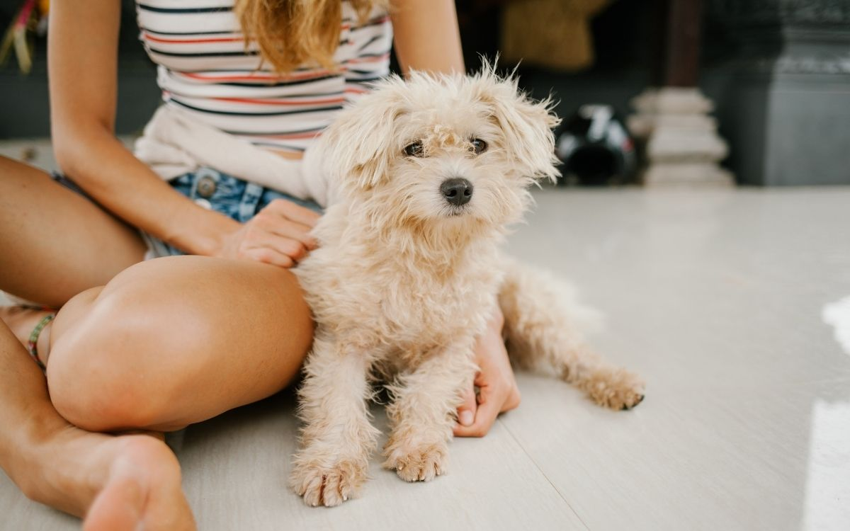 Tips for creating a pet-friendly home